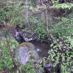 水源は自宅裏を流れる清流