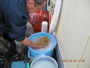 籾を水に漬ける臼澤さん