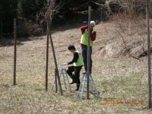 鹿よけネット設置作業
