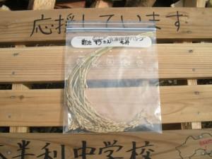 安渡産大槌復興米01はじまりの稲穂