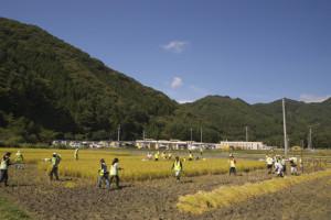 130924稲刈り - 06