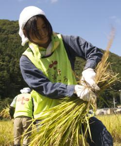 130924稲刈り - 08