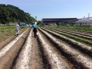 20140603遠野畑 (800x600)