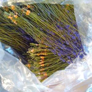 20160622 herb 1